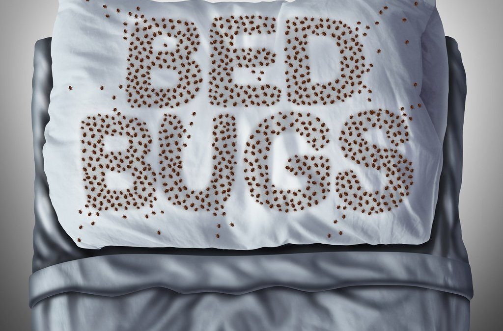 Expert Bed Bug Exterminator In New York City